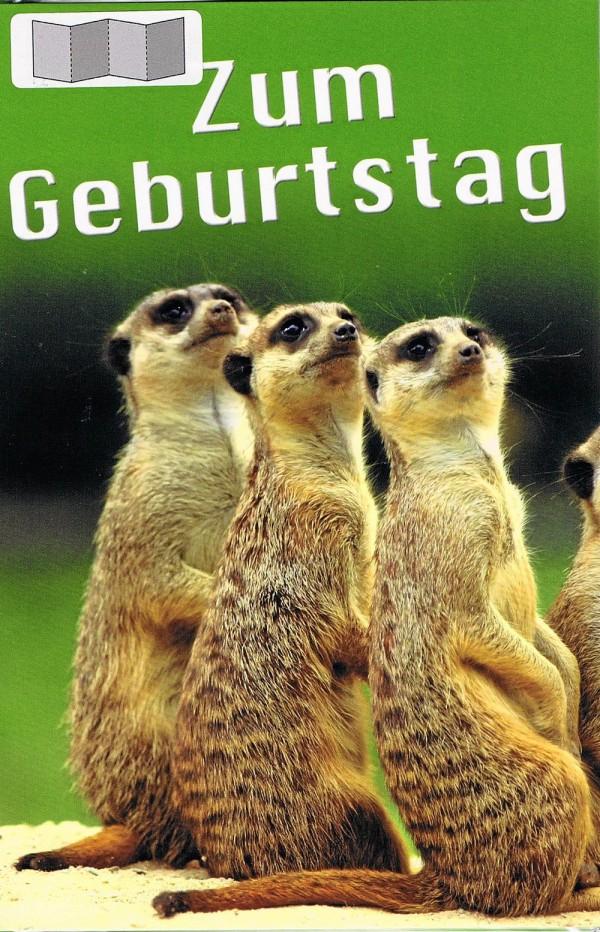 Leporellokarte zum Aufklappen mit Umschlag - Erdhörnchen