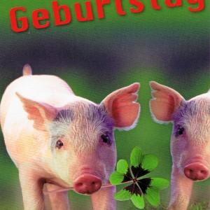 Leporellokarte zum Aufklappen mit Umschlag - Schweinchen