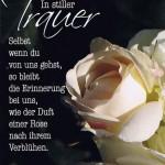 """Trauerkarte """"In stiller Trauer"""" mit weißer Rose"""