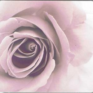 Grusskarte Rose mit Sepia-Effekt