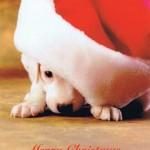 Postkarte Weihnachtswelpe