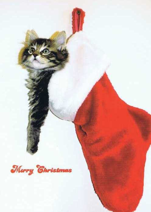 Postkarte Merry Christmas Kitty