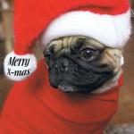 Postkarte Merry Christmas Doggy