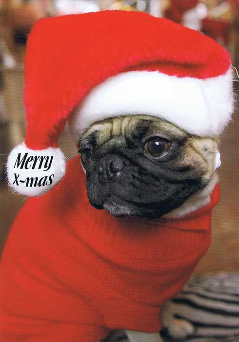 Postkarte Merry Christmas Doggy