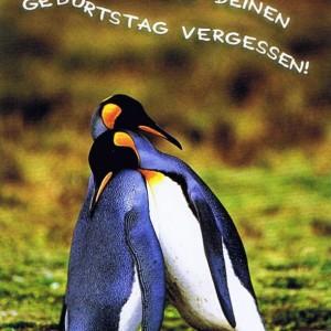 Postkarte Piguine, Sorry hab deinen Geburtstag vergessen