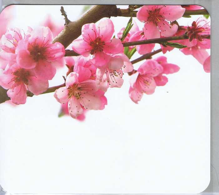 Neutrale Grusskarte Obstblüte