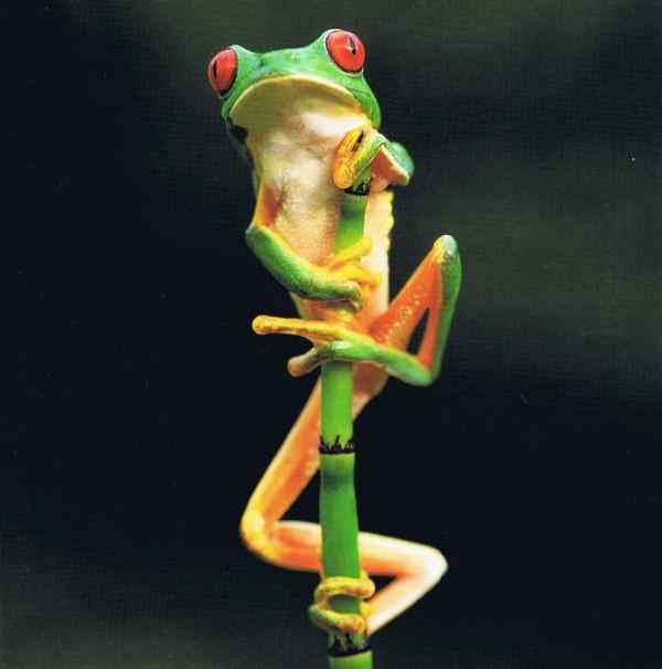 """Quadratische Doppelkarte Frosch """"Giftig? Nur zum Schein"""""""
