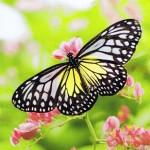 Quadratkarte Schmetterling, ohne Text