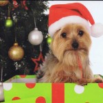 Kleine Weihnachtskarte - Weihnachtshündchen