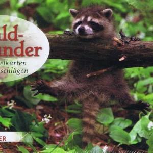 Kartenbox Waldwunder - 10 Doppelkarten mit Umschlägen