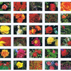 Postkartenbücher