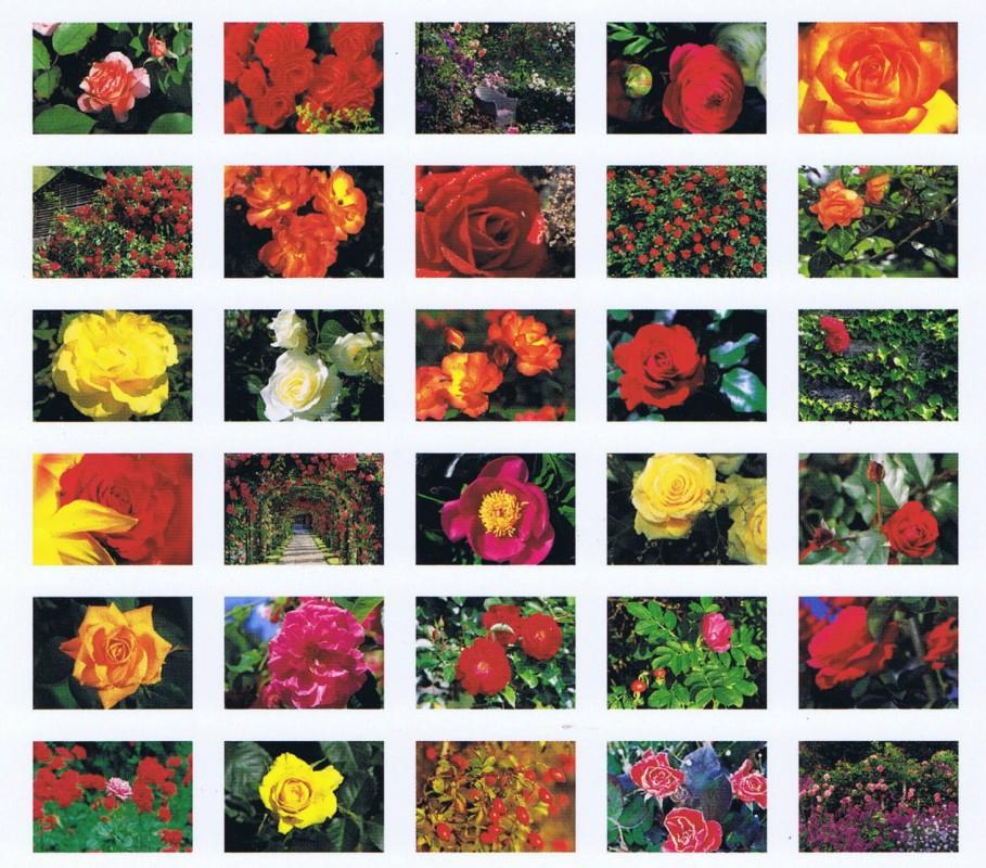 Postkartenbuch, Rosen, Roses