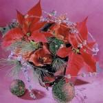 Weihnachtskarte mit Glimmer - Weihnachtsstern